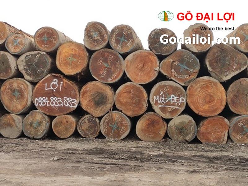 gỗ-mít-bán-cung-cấp-gỗ-mít (3)