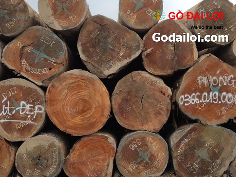 gỗ-mít-bán-cung-cấp-gỗ-mít (2)